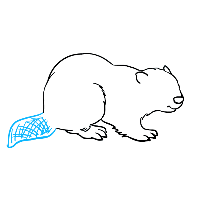 How to Draw Beaver: Step 7