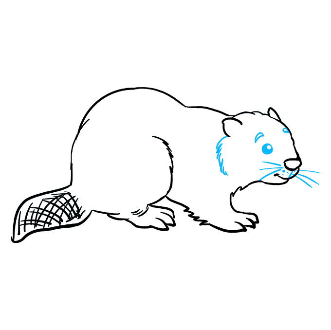 How to Draw Beaver: Step 8