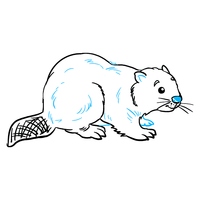 How to Draw Beaver: Step 9