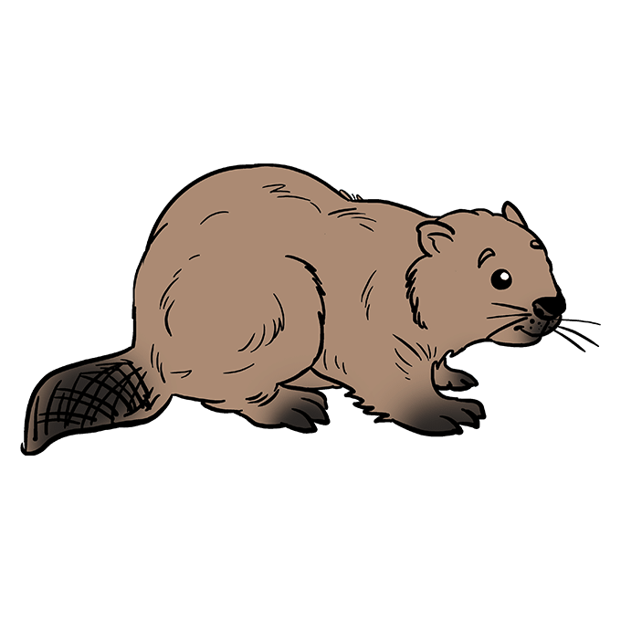 How to Draw Beaver: Step 10