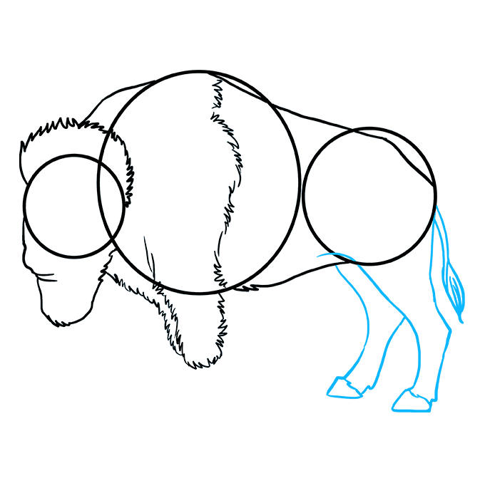How to Draw Buffalo: Step 7