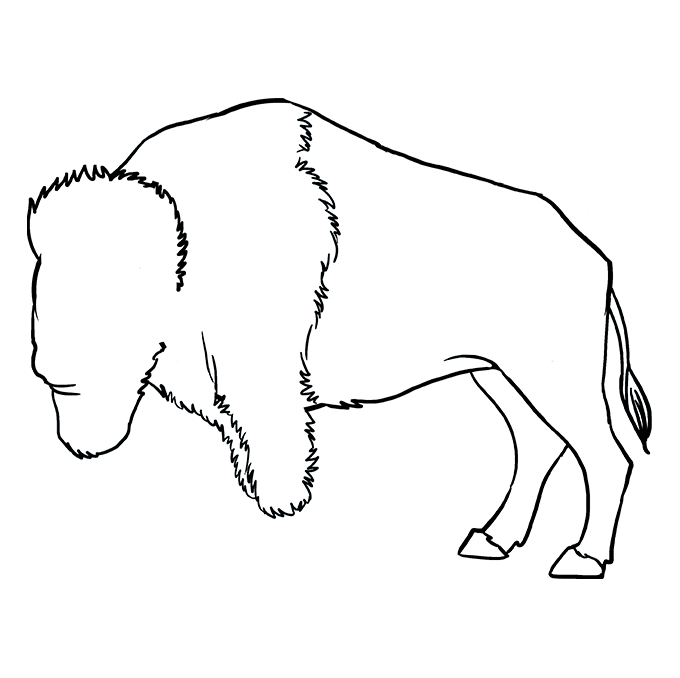 How to Draw Buffalo: Step 8