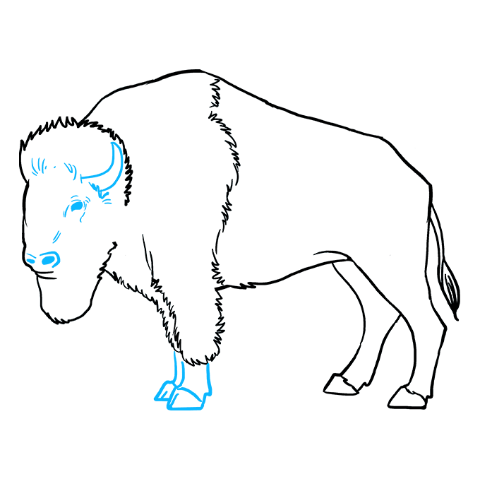 How to Draw Buffalo: Step 9