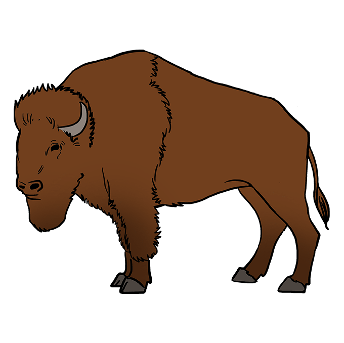 How to Draw Buffalo: Step 10