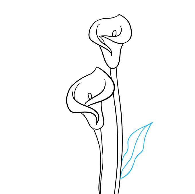 How to Draw Calla Lily: Step 7