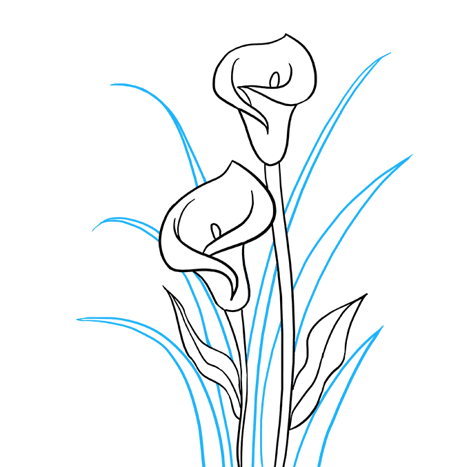 How to Draw Calla Lily: Step 9