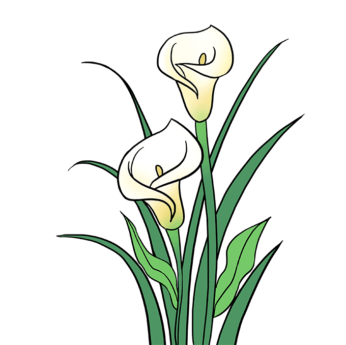 How to Draw Calla Lily: Step 10
