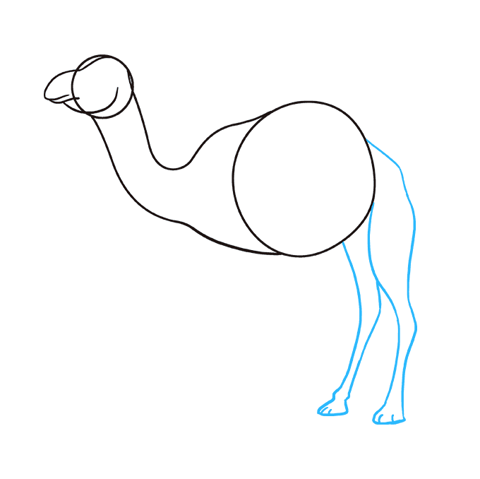 How to Draw Camel: Step 5