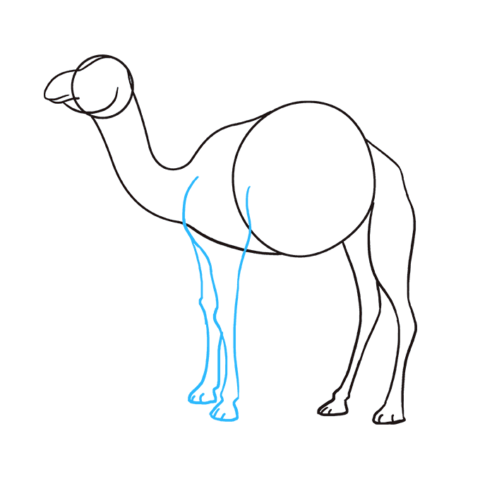 How to Draw Camel: Step 6
