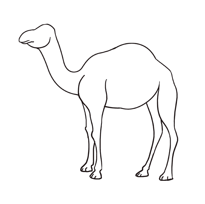 How to Draw Camel: Step 7