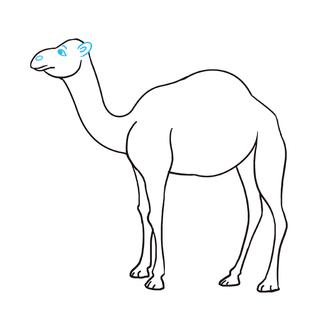 How to Draw Camel: Step 8