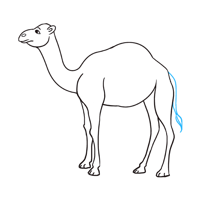 How to Draw Camel: Step 9