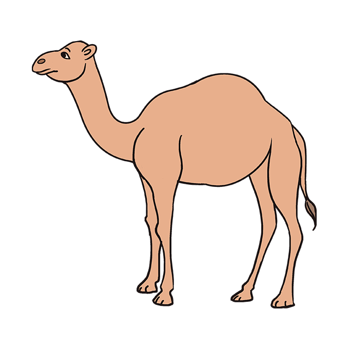 How to Draw Camel: Step 10
