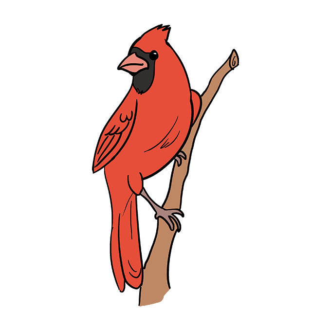 How to Draw Cardinal Bird: Step 10