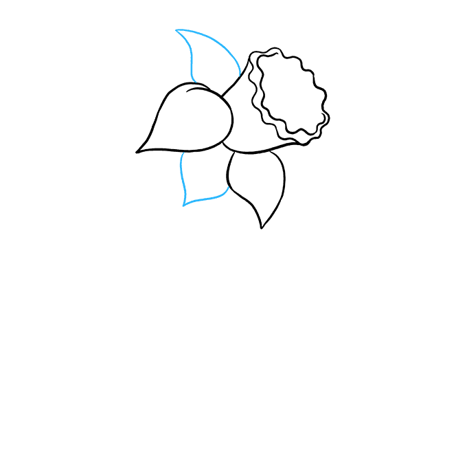 How to Draw Daffodil: Step 4