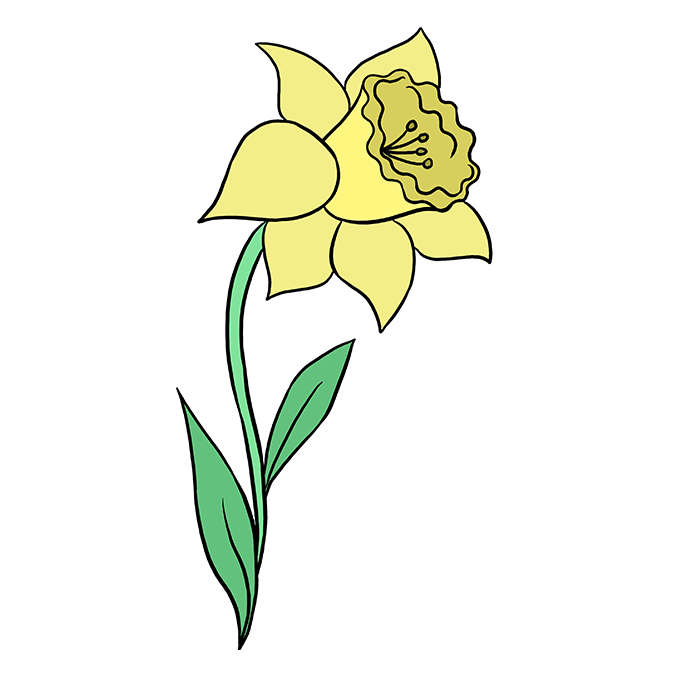 How to Draw Daffodil: Step 10
