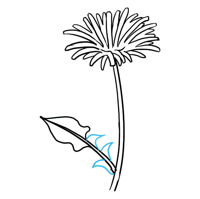 How to Draw Dandelion: Step 9