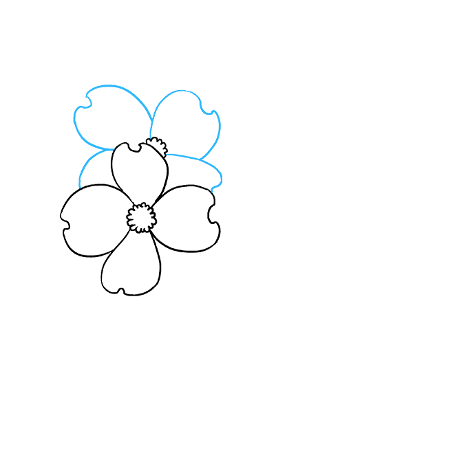 How to Draw Dogwood Flowers: Step 4