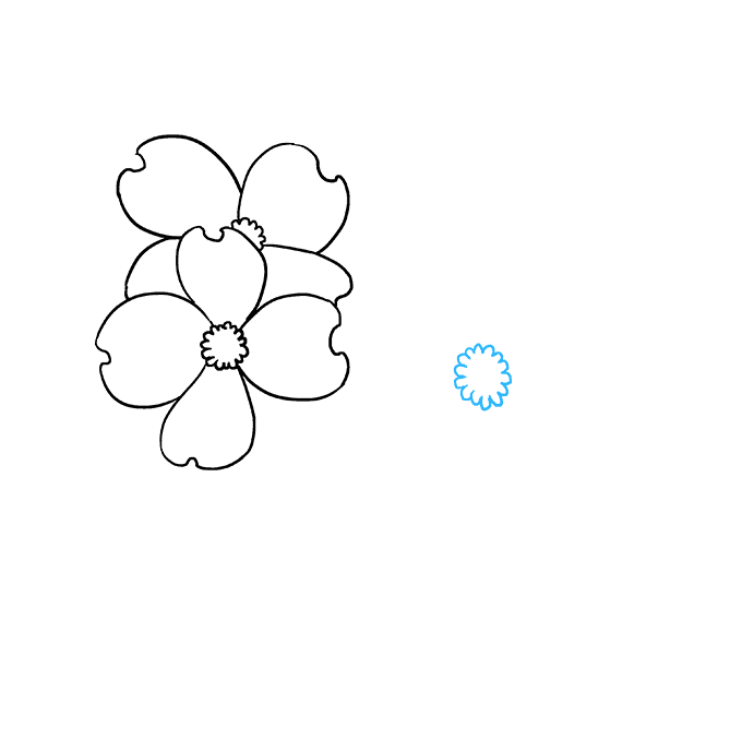 How to Draw Dogwood Flowers: Step 5