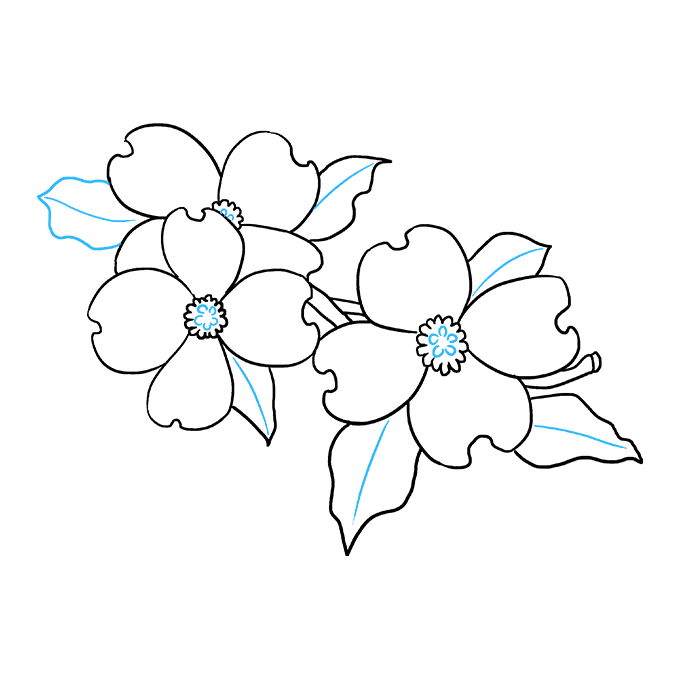 How to Draw Dogwood Flowers: Step 8