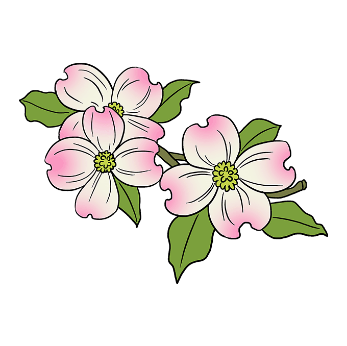 How to Draw Dogwood Flowers: Step 10