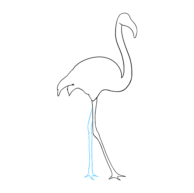 How to Draw Flamingo: Step 7