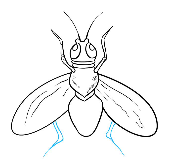 How to Draw Fly: Step 9