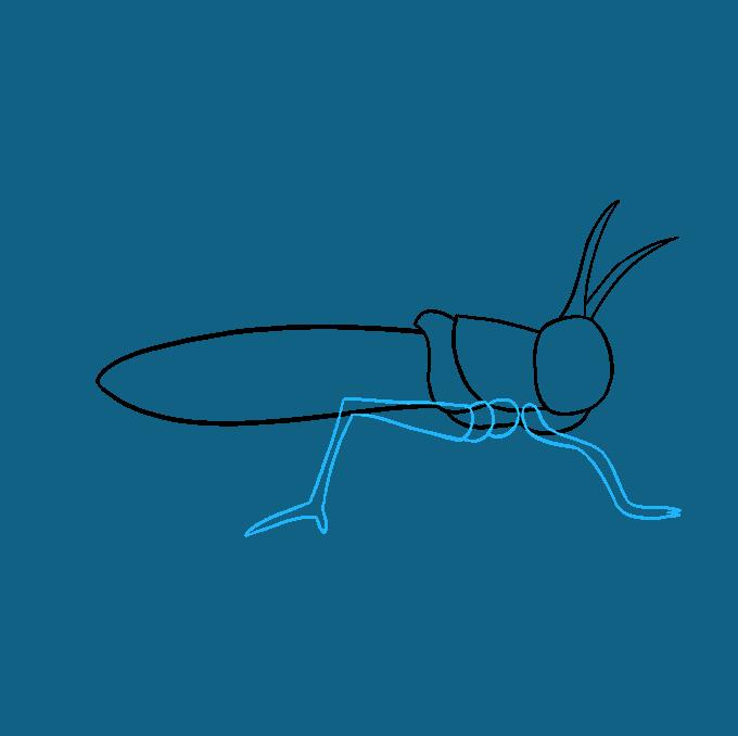 How to Draw a Grasshopper Step 06