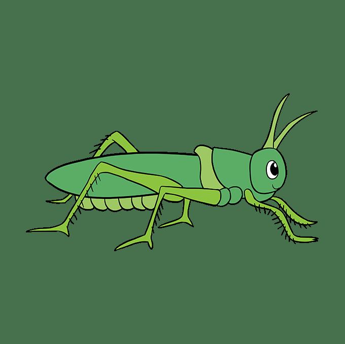 How to Draw a Grasshopper Step 10