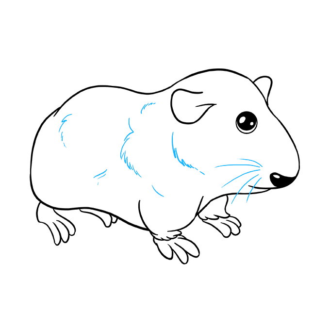 How to Draw Guinea Pig: Step 9