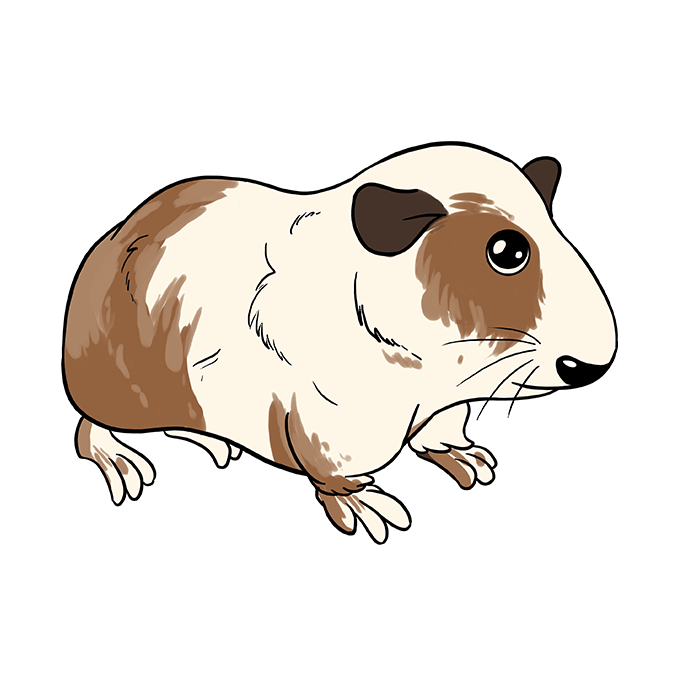 How to Draw Guinea Pig: Step 10