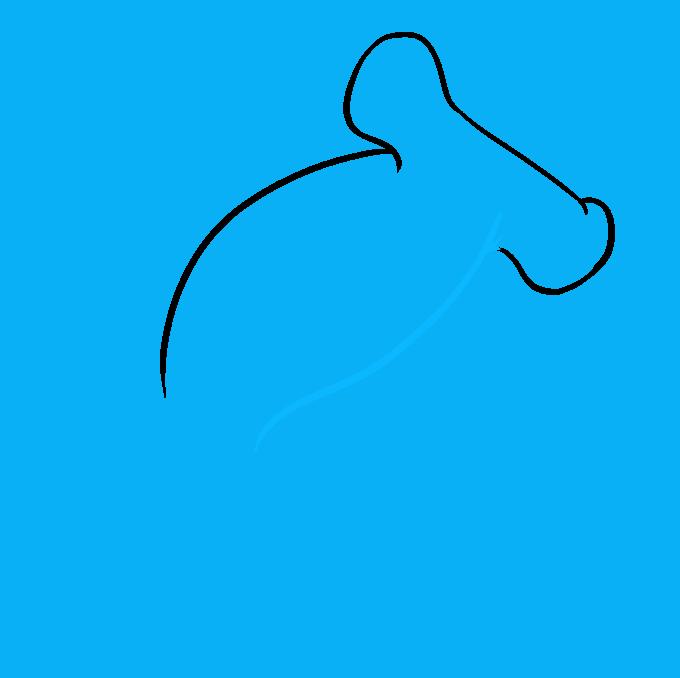 How to Draw Hammerhead Shark: Step 3