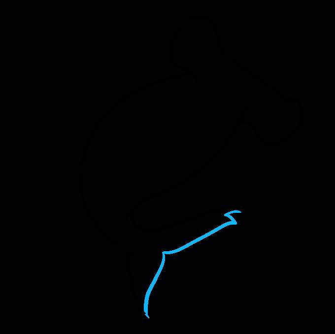 How to Draw Hammerhead Shark: Step 5