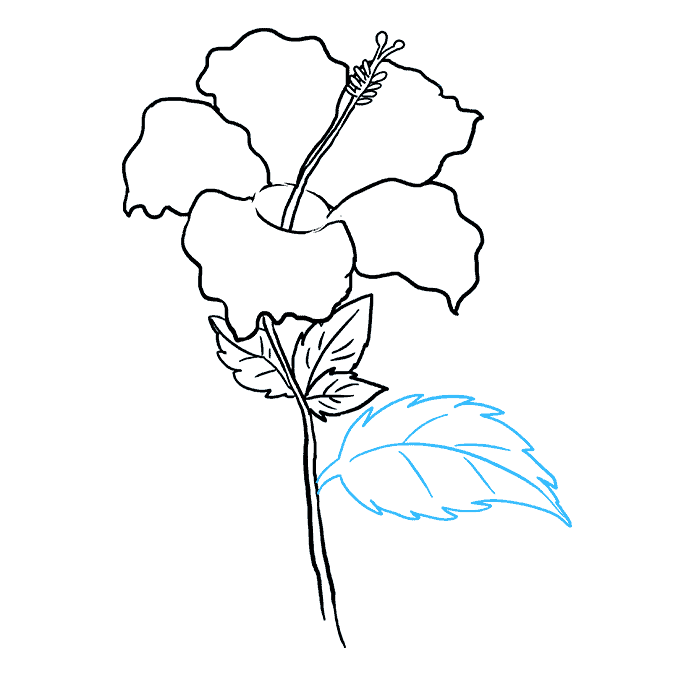 How to Draw Hibiscus: Step 8