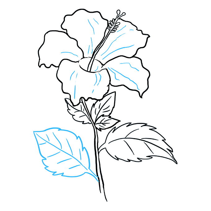 How to Draw Hibiscus: Step 9