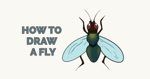 How to Draw a Fly Featured Image
