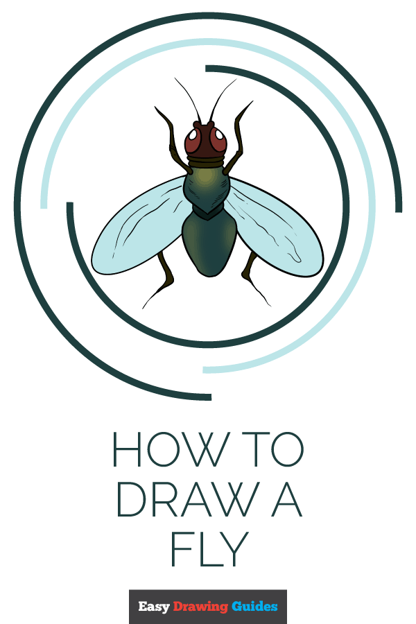 How to Draw Fly | Share to Pinterest