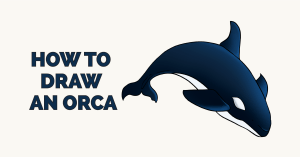 How to Draw an Orca Featured Image