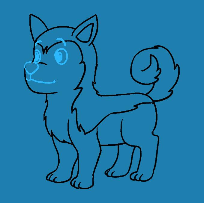 How to Draw Husky: Step 9