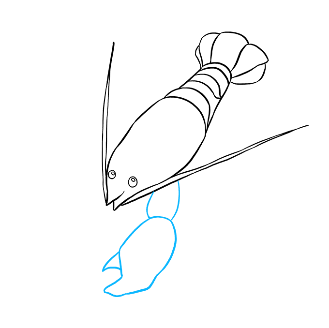 How to Draw Lobster: Step 5