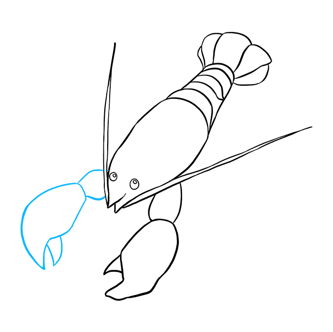 How to Draw Lobster: Step 6