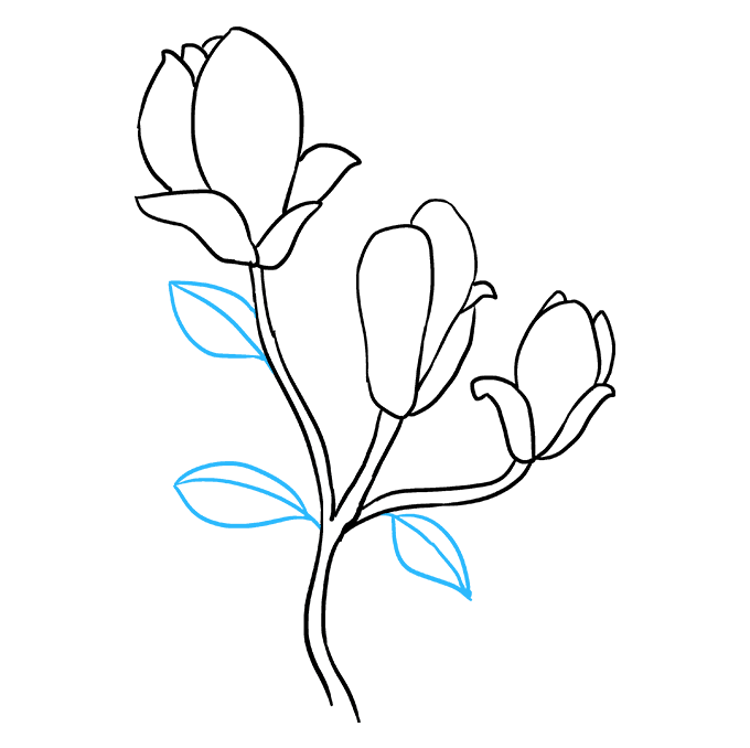 How to Draw Magnolia Flower Step 08