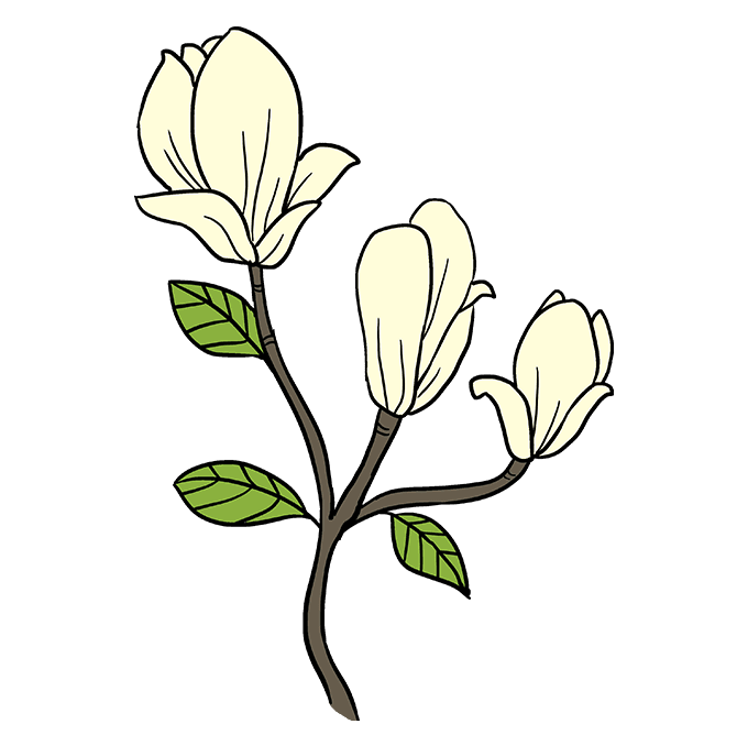 How to Draw Magnolia Flower Step 10