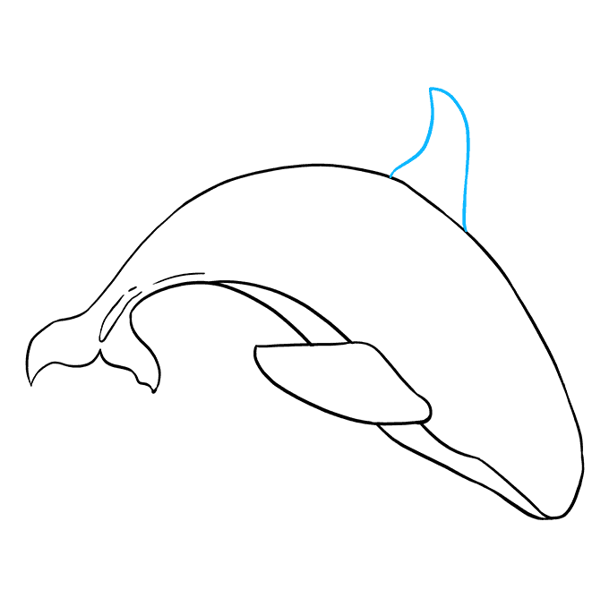 How to Draw Orca: Step 7