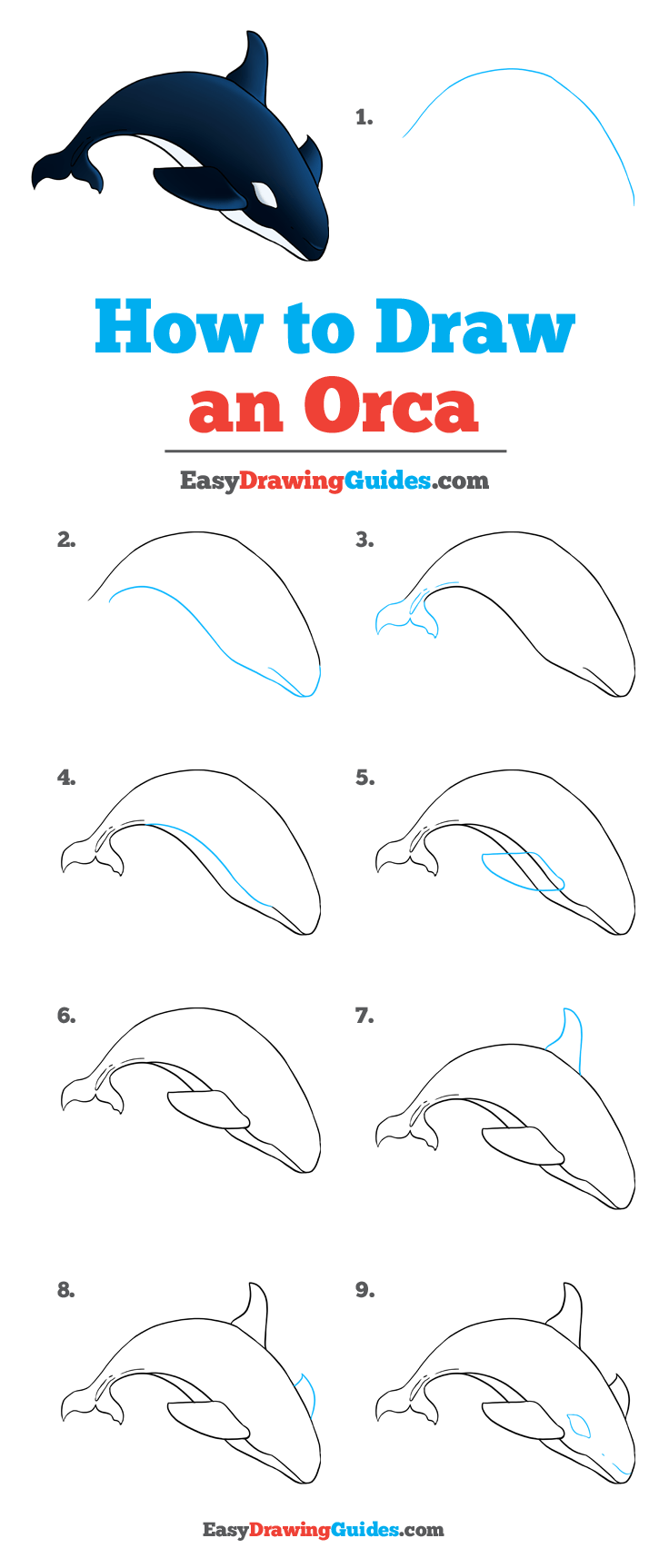 How to Draw Orca