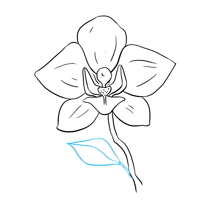 How to Draw Orchid: Step 9