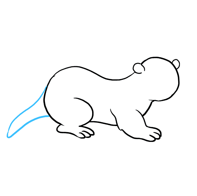 How to Draw Otter: Step 6