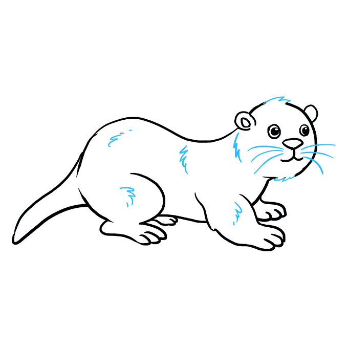 How to Draw Otter: Step 9