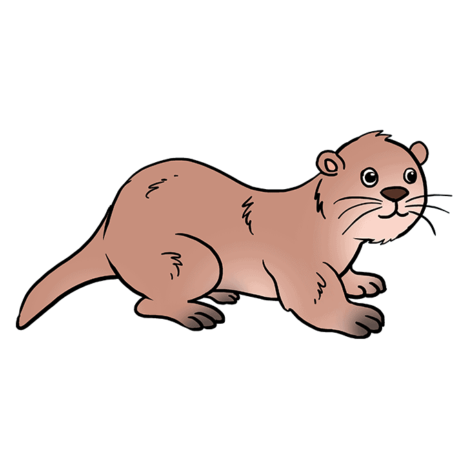 How to Draw Otter: Step 10