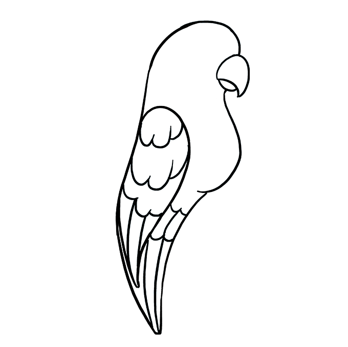 How to Draw Parrot: Step 7